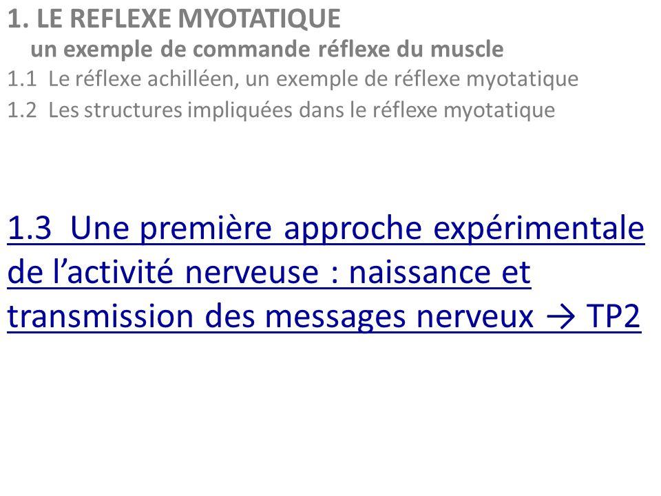 1. LE REFLEXE MYOTATIQUE un exemple de commande réflexe du muscle. 1.1 Le réflexe achilléen, un exemple de réflexe myotatique.