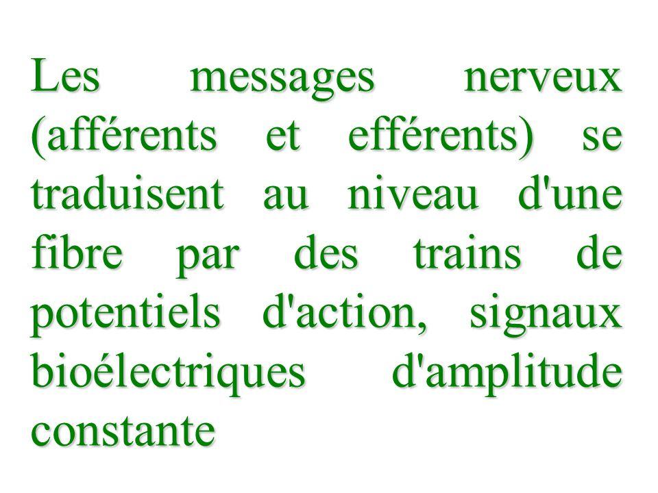 Les messages nerveux (afférents et efférents) se traduisent au niveau d une fibre par des trains de potentiels d action, signaux bioélectriques d amplitude constante