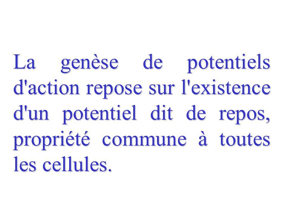 La genèse de potentiels d action repose sur l existence d un potentiel dit de repos, propriété commune à toutes les cellules.