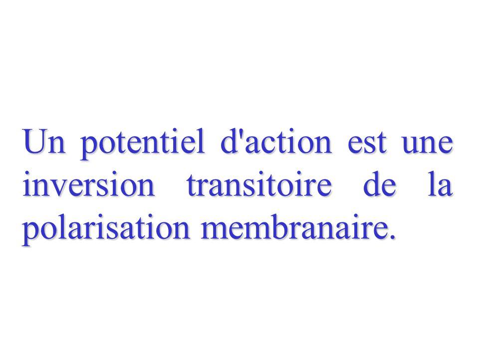 Un potentiel d action est une inversion transitoire de la polarisation membranaire.