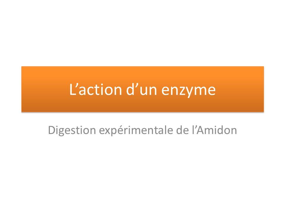 Digestion expérimentale de l'Amidon