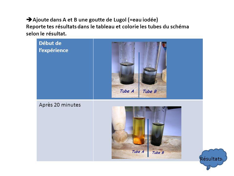 Ajoute dans A et B une goutte de Lugol (=eau iodée) Reporte tes résultats dans le tableau et colorie les tubes du schéma selon le résultat.
