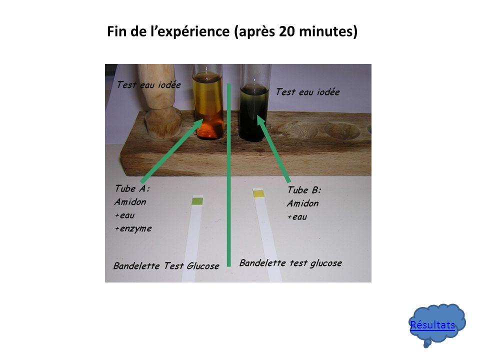 Fin de l'expérience (après 20 minutes)