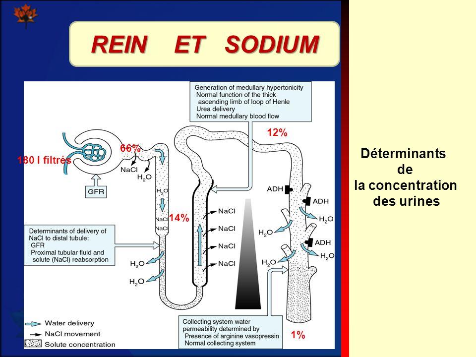 REIN ET SODIUM Déterminants de la concentration des urines 12% 66%