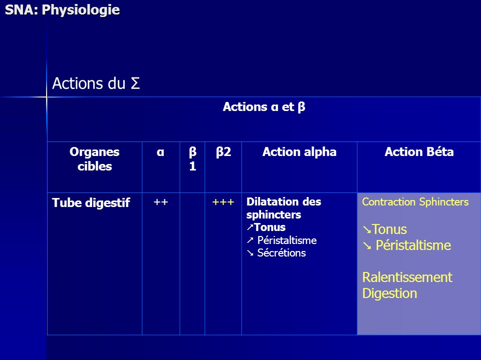 Actions du Σ SNA: Physiologie Ralentissement Digestion Actions α et β