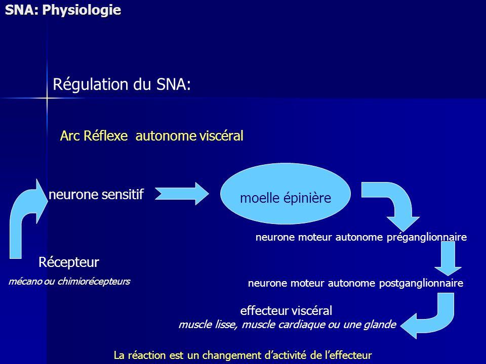 Régulation du SNA: SNA: Physiologie Arc Réflexe autonome viscéral