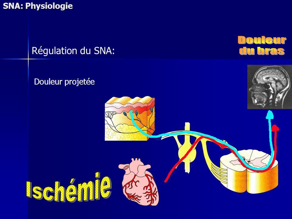 Douleur du bras Ischémie Régulation du SNA: SNA: Physiologie