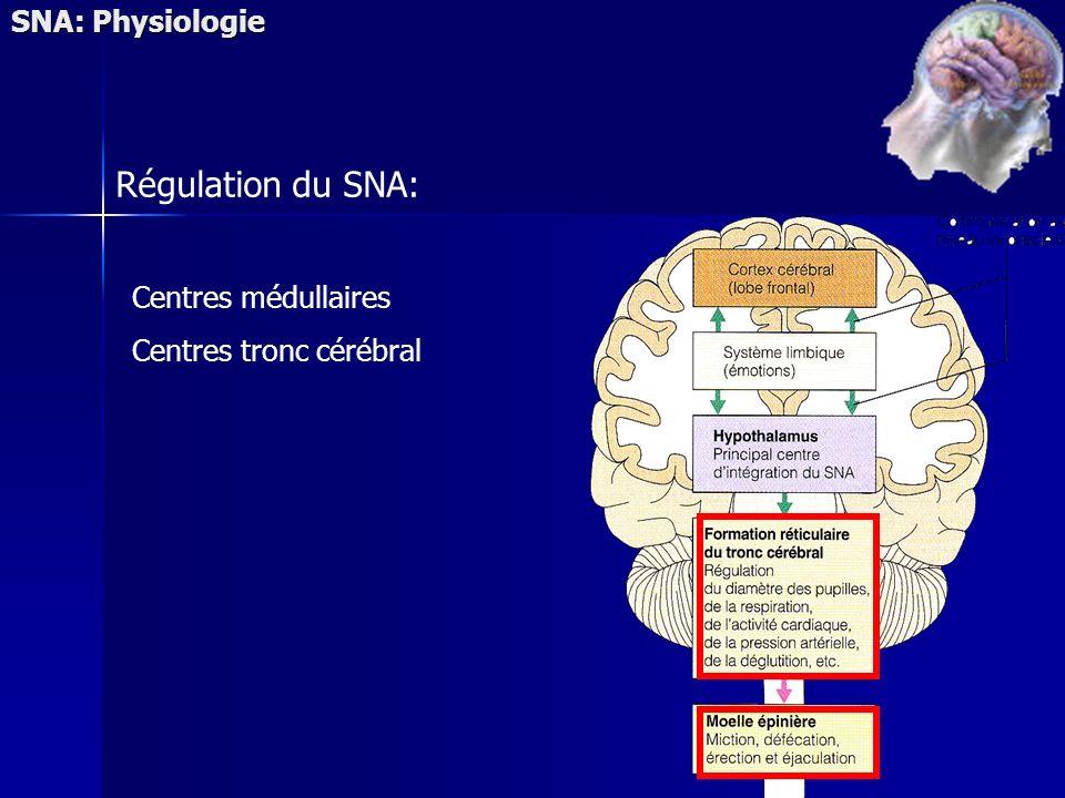Régulation du SNA: SNA: Physiologie Centres médullaires