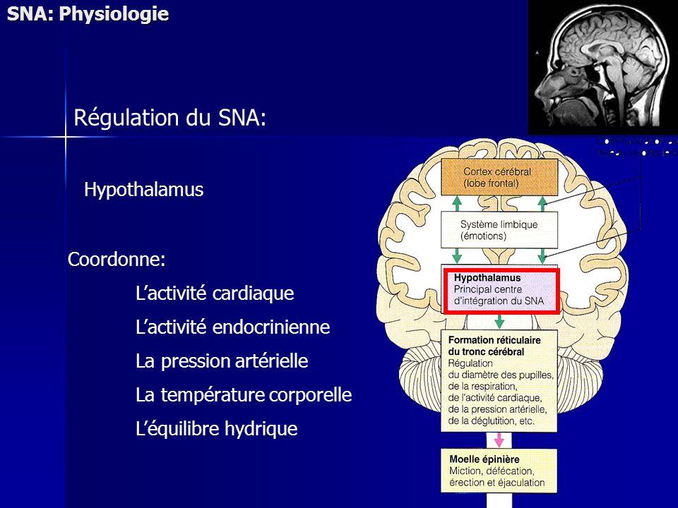 Régulation du SNA: SNA: Physiologie Hypothalamus Coordonne: