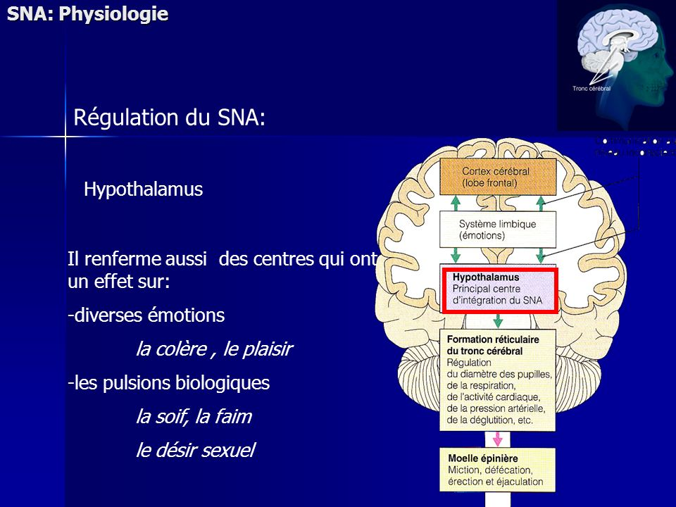 Régulation du SNA: SNA: Physiologie Hypothalamus