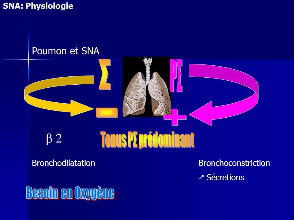 Σ PΣ - + β 2 Besoin en Oxygène Poumon et SNA SNA: Physiologie