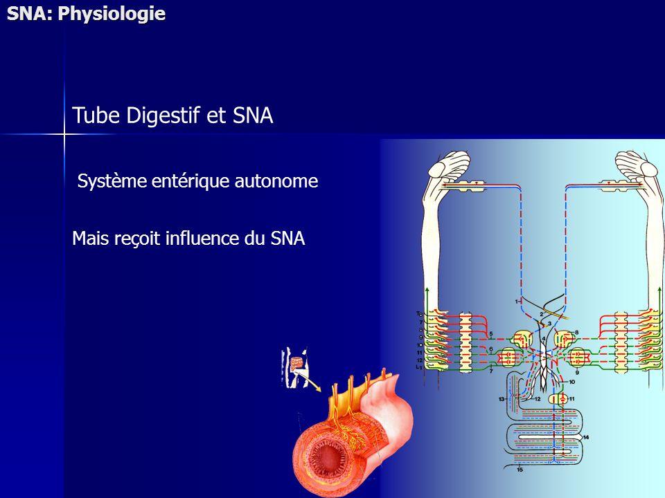 Tube Digestif et SNA SNA: Physiologie Système entérique autonome