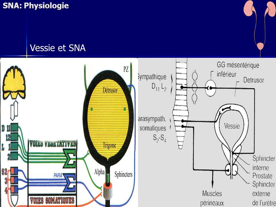 SNA: Physiologie Vessie et SNA