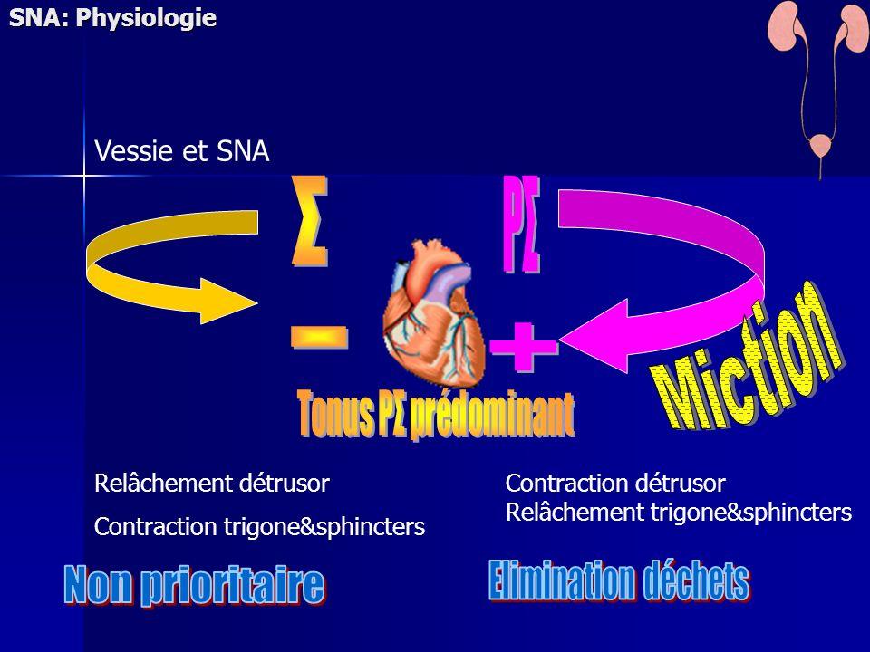 Σ PΣ Miction - + Elimination déchets Non prioritaire Vessie et SNA