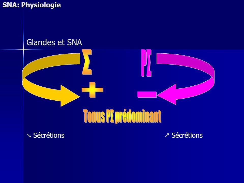 Σ PΣ + - Glandes et SNA SNA: Physiologie  Sécrétions  Sécrétions