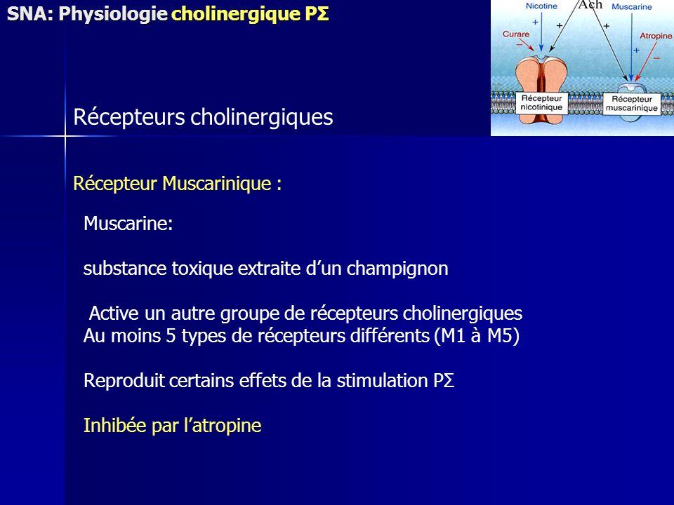 Récepteurs cholinergiques