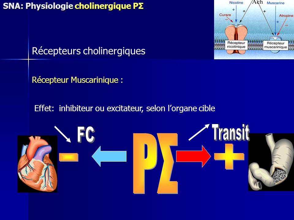 PΣ + - Transit FC Récepteurs cholinergiques