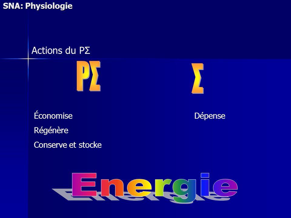 PΣ Σ Energie Actions du PΣ SNA: Physiologie Économise Régénère
