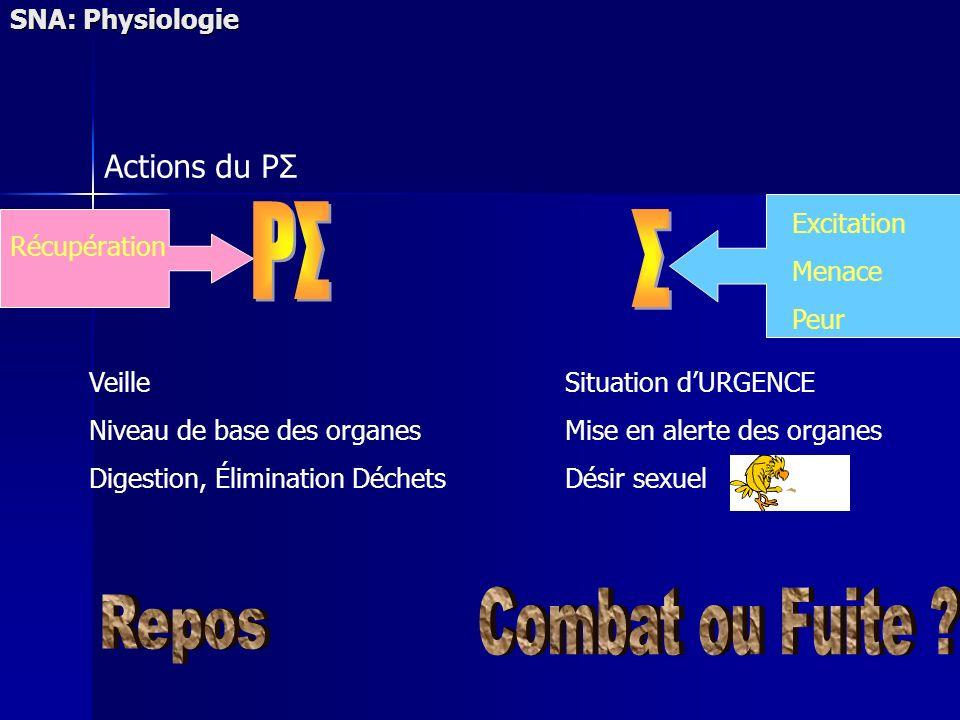 PΣ Σ Combat ou Fuite Repos Actions du PΣ SNA: Physiologie Excitation