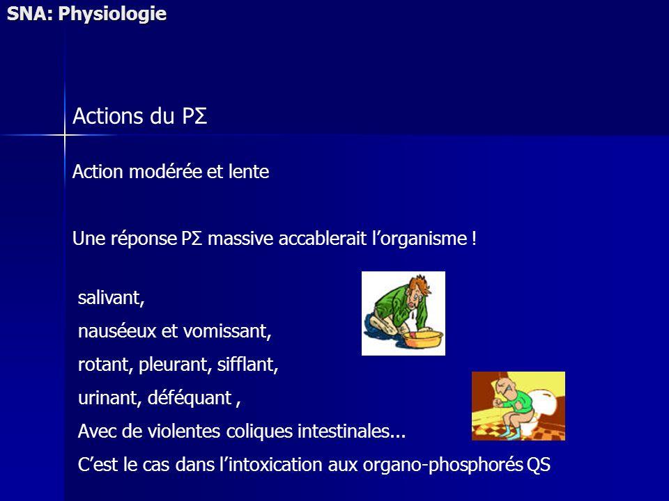 Actions du PΣ SNA: Physiologie Action modérée et lente