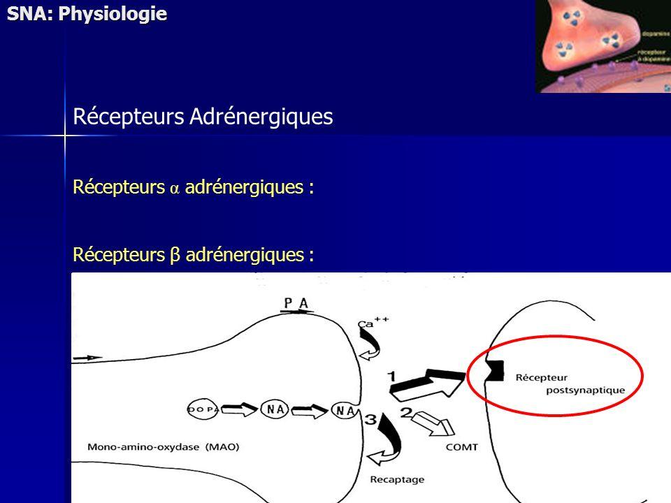Récepteurs Adrénergiques