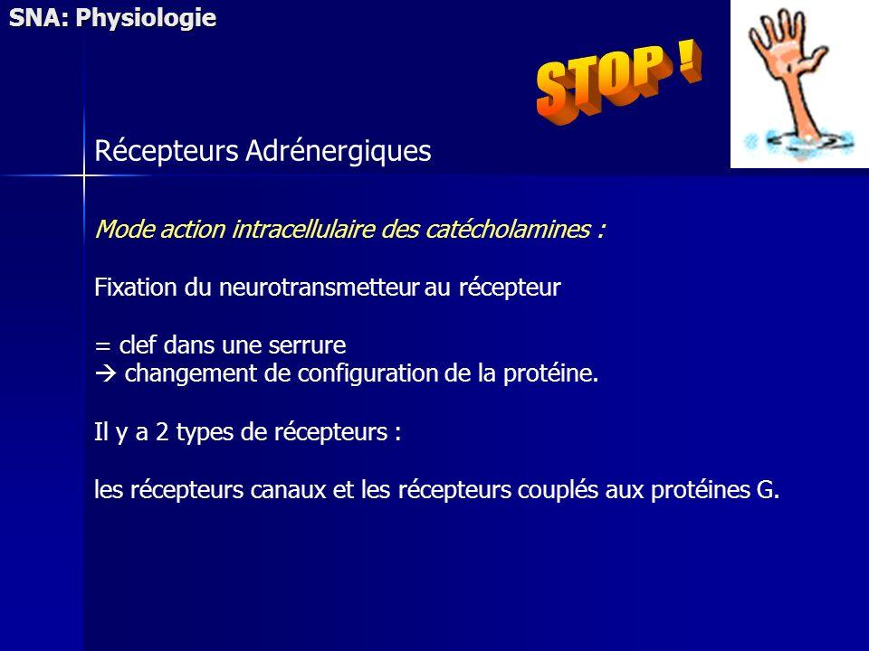 STOP ! Récepteurs Adrénergiques SNA: Physiologie