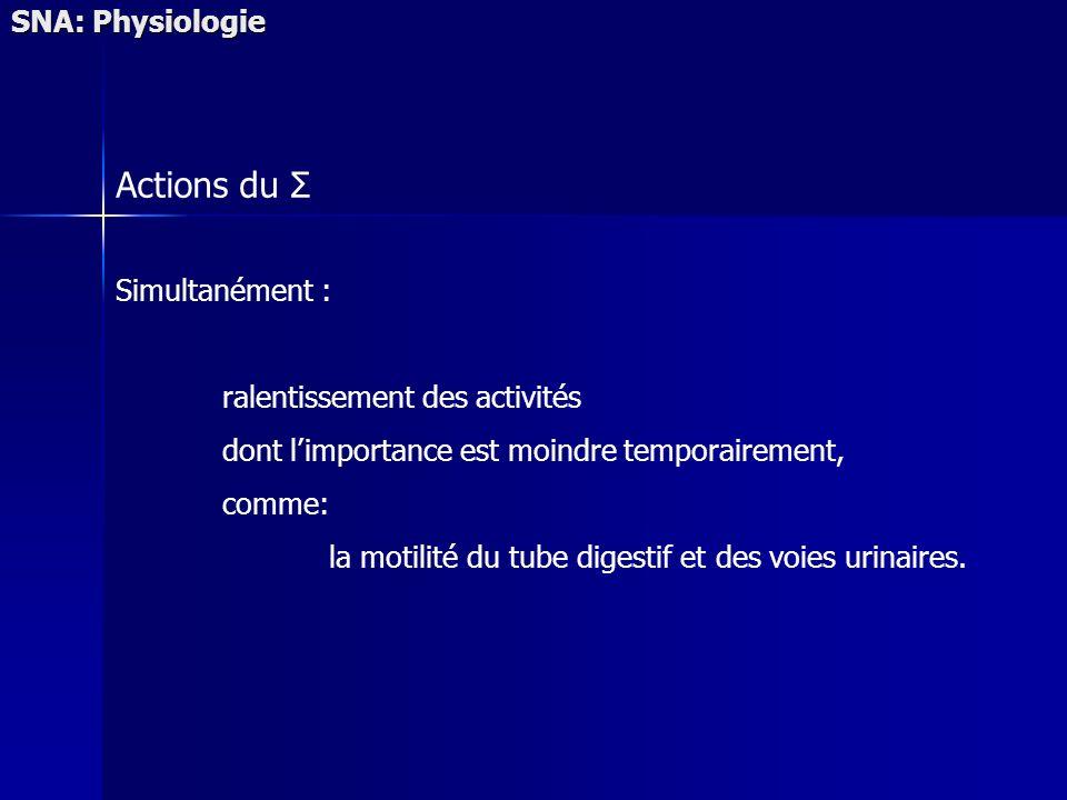 Actions du Σ SNA: Physiologie Simultanément :