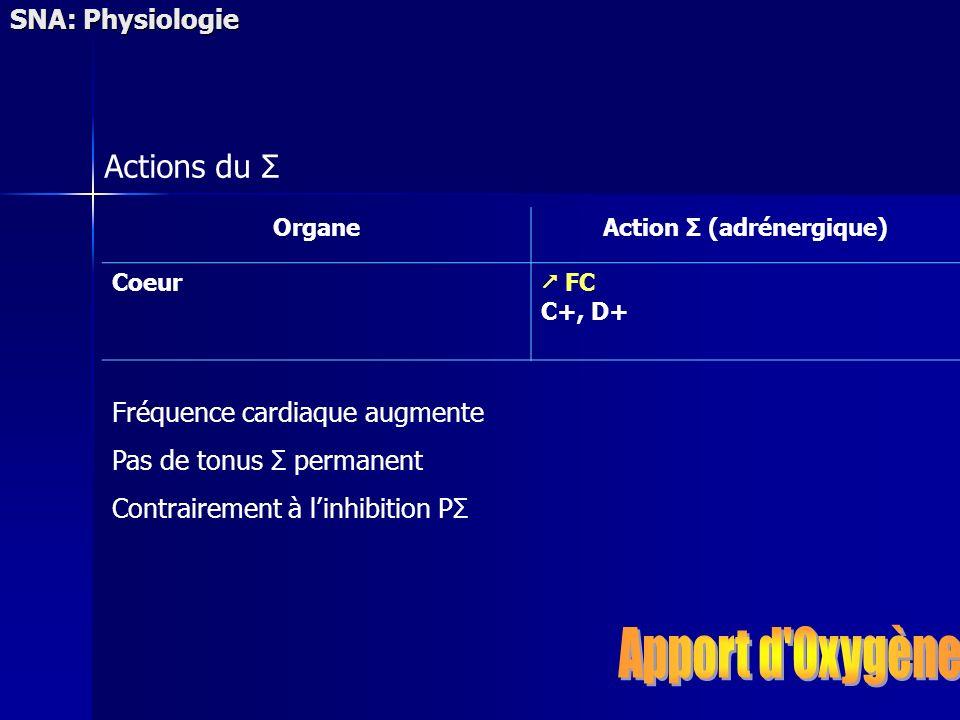 Action Σ (adrénergique)