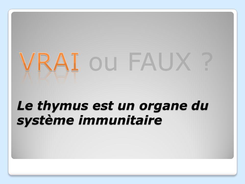 Le thymus est un organe du système immunitaire