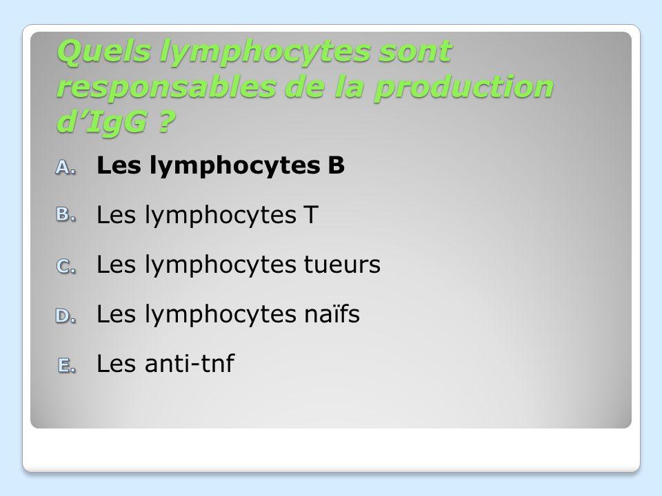 Quels lymphocytes sont responsables de la production d'IgG