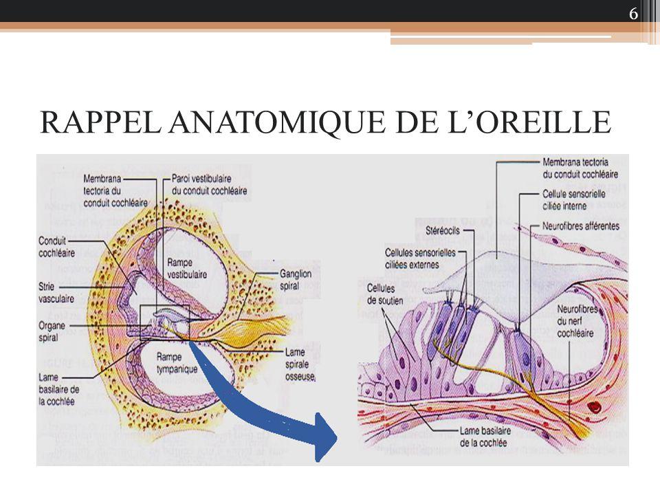 RAPPEL ANATOMIQUE DE L'OREILLE