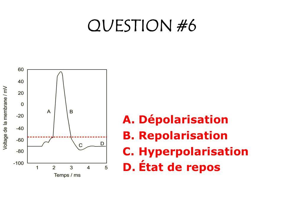 QUESTION #6 Dépolarisation Repolarisation Hyperpolarisation