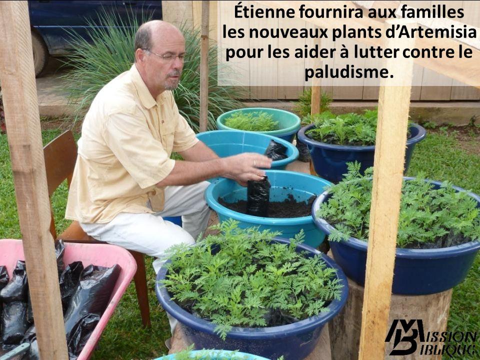 Étienne fournira aux familles les nouveaux plants d'Artemisia
