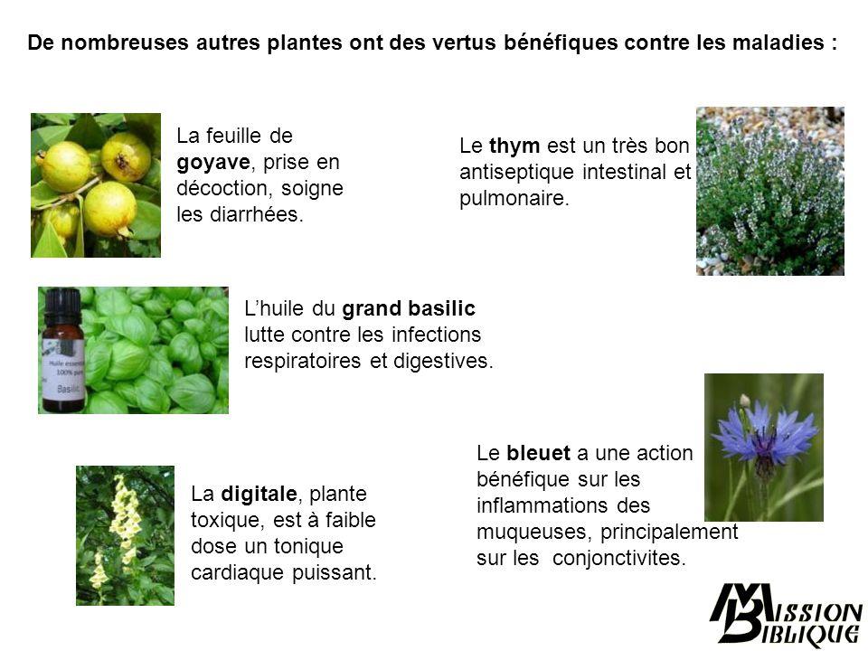 De nombreuses autres plantes ont des vertus bénéfiques contre les maladies :