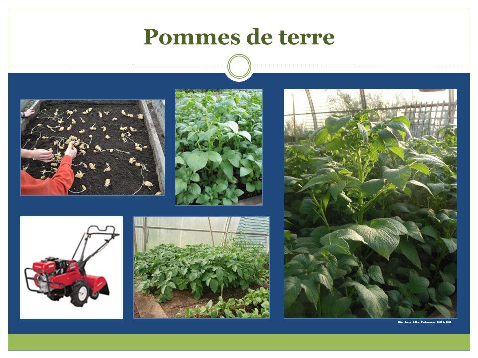 Pommes de terre Ellen Avard & Eric Duchesneau, 2012 & 2013