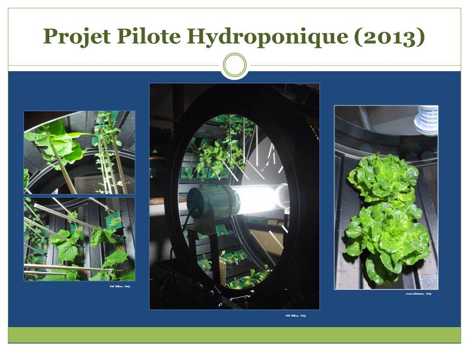 Projet Pilote Hydroponique (2013)