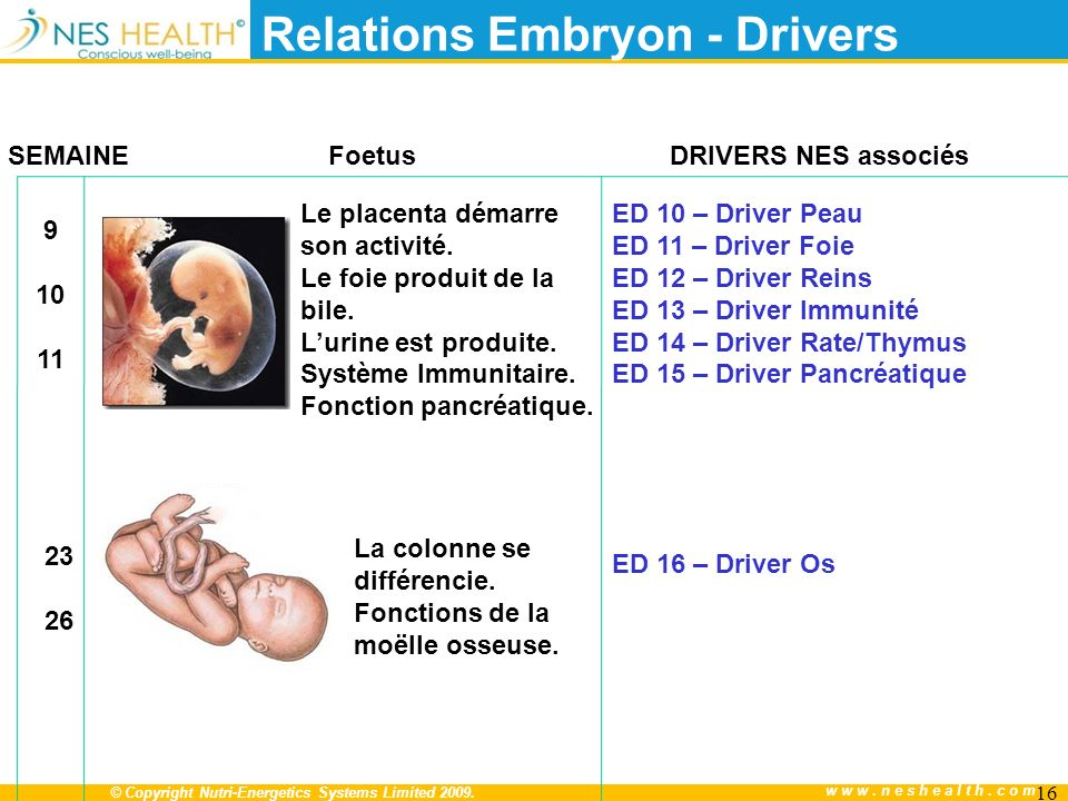 Relations Embryon - Drivers