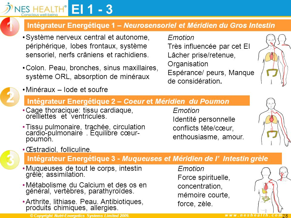 EI 1 - 3 Intégrateur Energétique 1 – Neurosensoriel et Méridien du Gros Intestin.