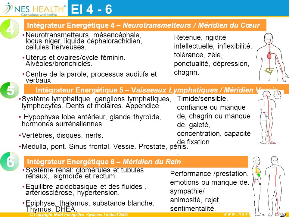 Intégrateur Energétique 5 – Vaisseaux Lymphatiques / Méridien Vessie