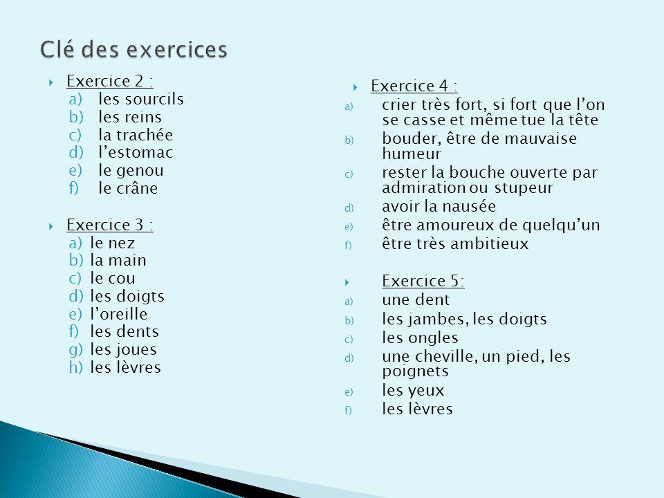 Clé des exercices Exercice 2 : Exercice 4 : les sourcils
