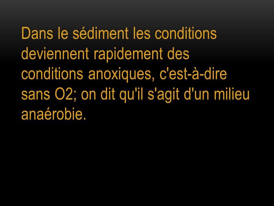 Dans le sédiment les conditions deviennent rapidement des conditions anoxiques, c est-à-dire sans O2; on dit qu il s agit d un milieu anaérobie.