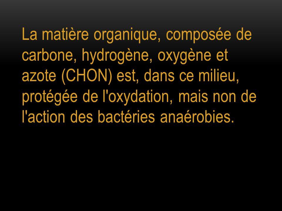 La matière organique, composée de carbone, hydrogène, oxygène et azote (CHON) est, dans ce milieu, protégée de l oxydation, mais non de l action des bactéries anaérobies.