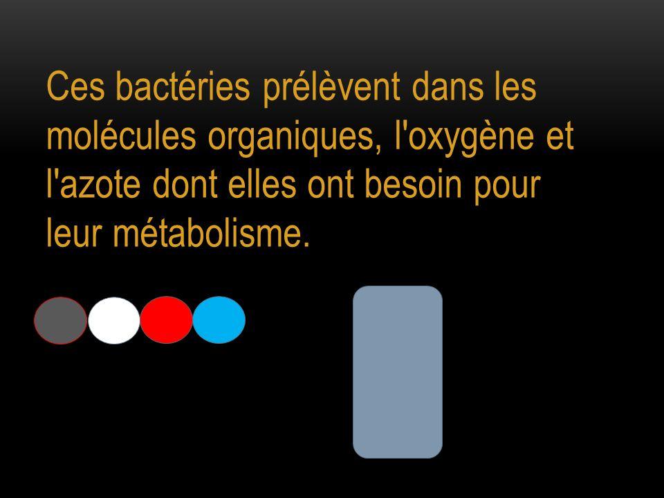 Ces bactéries prélèvent dans les molécules organiques, l oxygène et l azote dont elles ont besoin pour leur métabolisme.