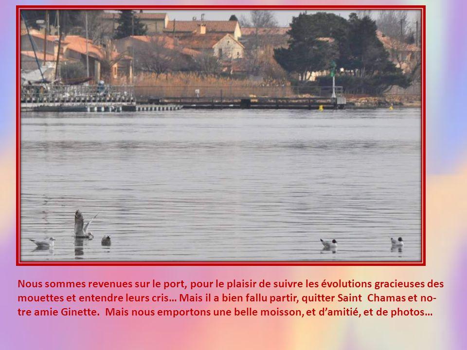 Nous sommes revenues sur le port, pour le plaisir de suivre les évolutions gracieuses des mouettes et entendre leurs cris… Mais il a bien fallu partir, quitter Saint Chamas et no-tre amie Ginette.