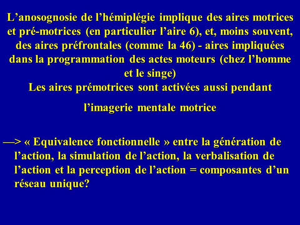 L'anosognosie de l'hémiplégie implique des aires motrices et pré-motrices (en particulier l'aire 6), et, moins souvent, des aires préfrontales (comme la 46) - aires impliquées dans la programmation des actes moteurs (chez l'homme et le singe) Les aires prémotrices sont activées aussi pendant l'imagerie mentale motrice