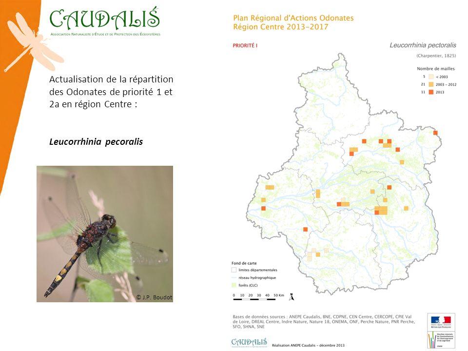 Leucorrhinia pecoralis