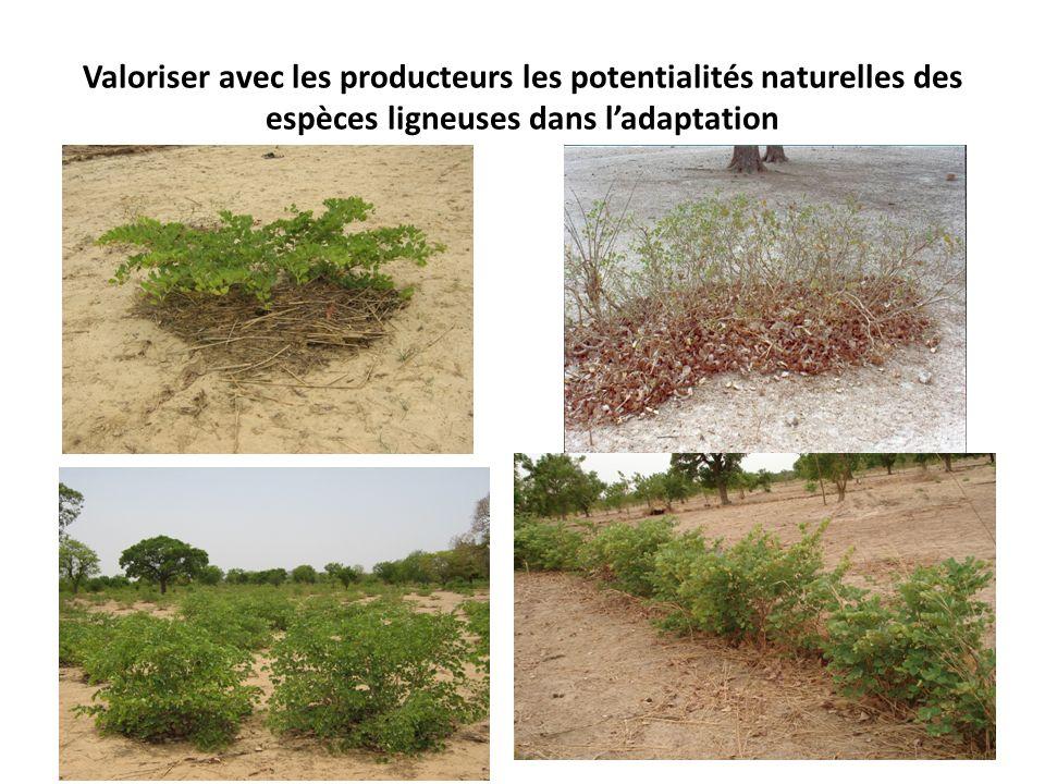 Valoriser avec les producteurs les potentialités naturelles des espèces ligneuses dans l'adaptation