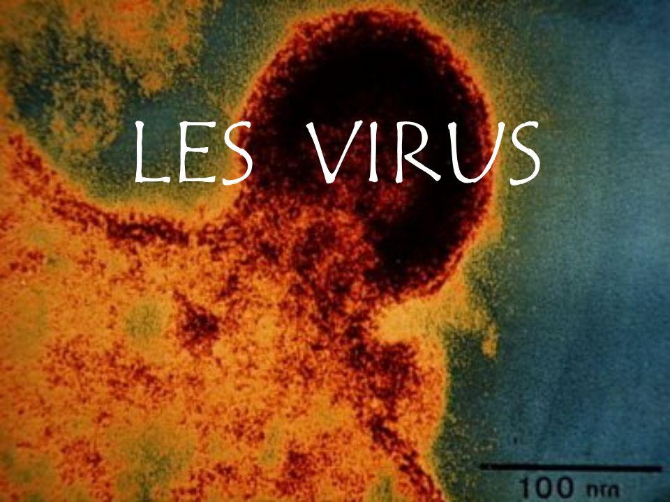 LES VIRUS