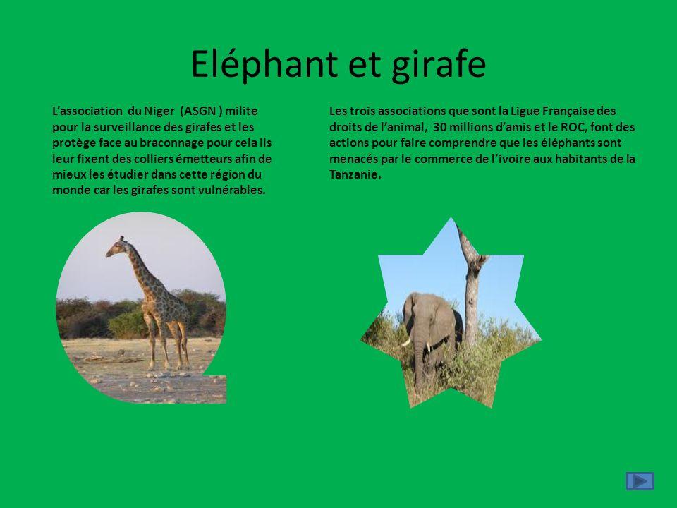 Eléphant et girafe