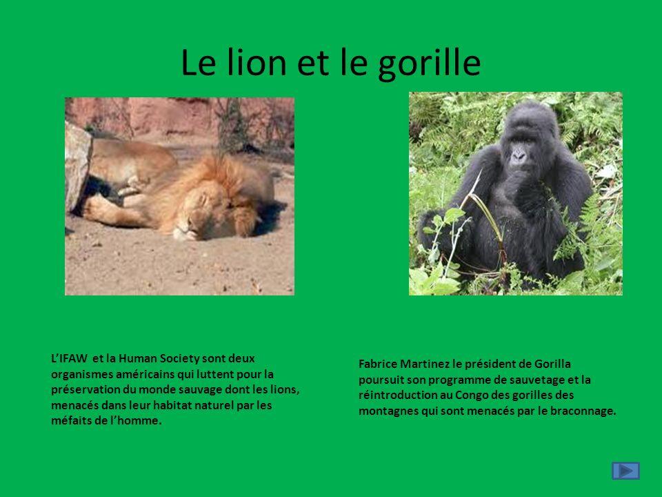 Le lion et le gorille